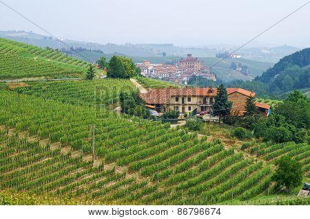 Vineyards In Piemont Overlooking The Town Of Barolo