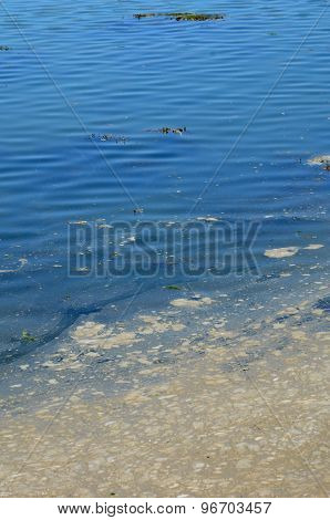 Bretagne, Polluted Water In The Port Of Ploumanac H