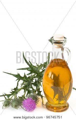 Oil Of Milk Thistle
