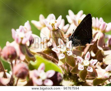 Butterfly in the flowers