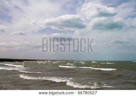 Beach With Reeds