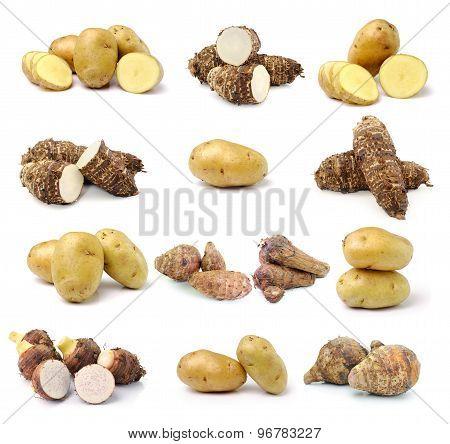 Taro Root And Potato On White Background