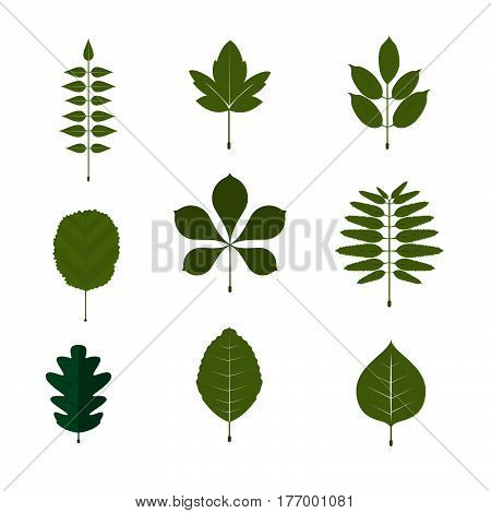 Leaf Symbol And Icon Set. White Background Leaf Vector Illustration.