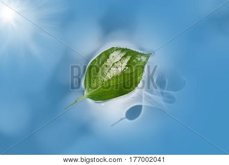 Leaf floating in blue water with sun reflection / refraction on pond surface