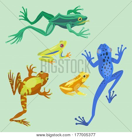Frog cartoon tropical animal cartoon nature icon funny and isolated mascot character wild funny forest toad amphibian vector illustration. Graphic ecosystem croaking hop drawin.