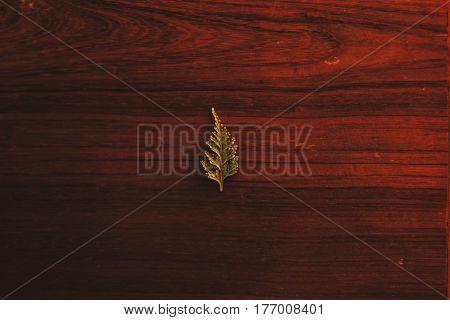 ein grünes Blatt auf einem dunkel braunen holzoberfläche