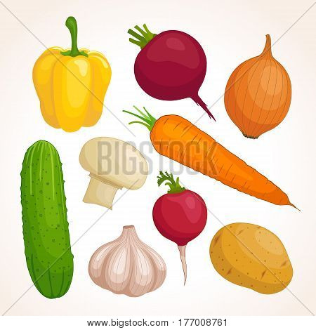 Set of fresh vegetables isolated on background. Vector illustration. Collection of potato carrot beet radish onion garlic mushroom cucumber sweet pepper Food template