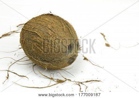coconut pulp fresh tropical brown white organic coconut milk
