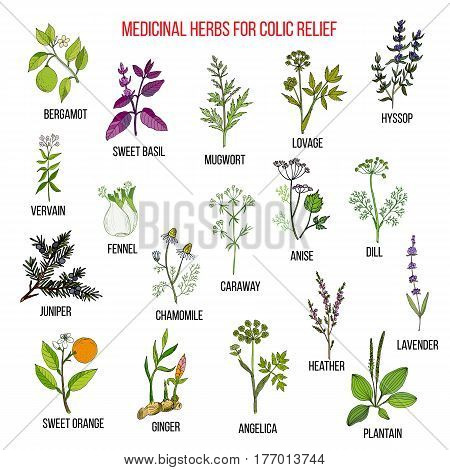 Best herbal remedies for colic relief. Hand drawn set of medicinal herbs