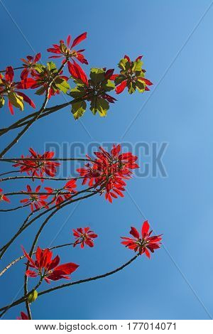 Red Flowers On Tree