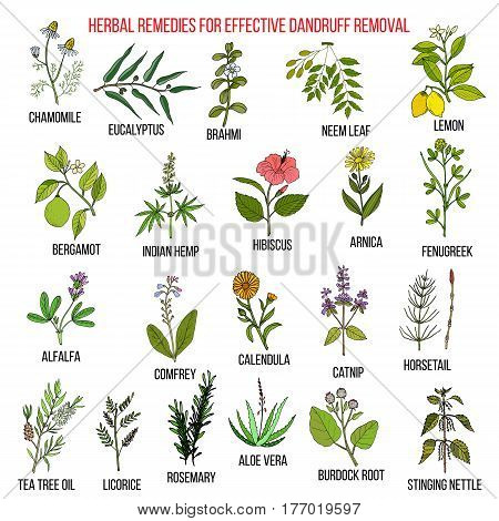 Best herbal remedies for effective dandruff removal. Hand drawn vector set of medicinal plants