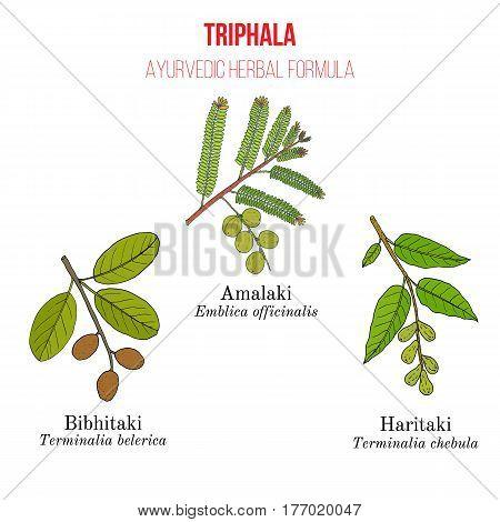 Best Ayurvedic Herbal Remedy Formulation, Triphala With Three Herbs Amla, Hareetaki, Vibheetaki