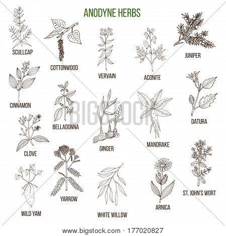 Anodyne Herbs. Hand Drawn Set Of Medicinal Plants