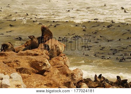 penguins and fur seals on the Boulders Beach located in the Cape Peninsula, South Africa