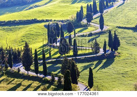 Tuscany landscape in the morning. Tuscany Italy.