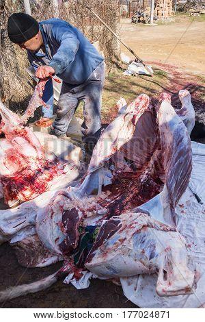 Tatar Butcher Cut The Carcass Of A Bull