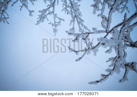 Winter background with brunches covered with snow in blue. Shot with soft focus. Retouched and vignette is added.