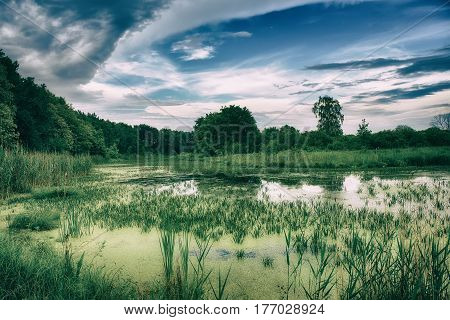 Beautiful summer landscape with swamp, green forest and blue sky with clouds. Natural outdoors enviromental concept
