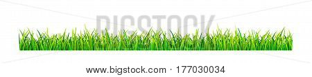 Grassy lawn on a white background. Green grass banner.