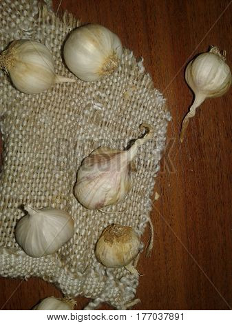 Tsybulyasta garlic, herb One of the most popular and best-known members of the genus Onion. Pharmaceutical and food culture, which belongs to the spice and is a typical component of several national cuisines. Wildly growing in Europe and Asia; widely cult