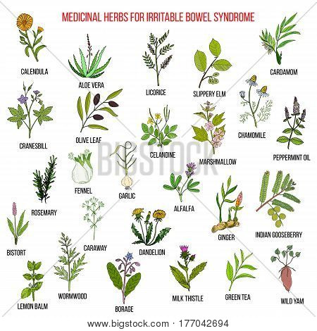 Best herbs for irritable bowel syndrome IBS . Hand drawn set of medicinal herbs