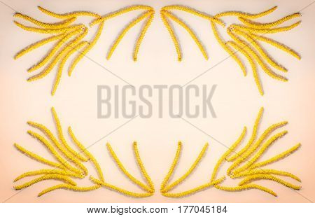 abstract floral composition the frame of yellow flowers earrings hazel on flesh color background with space for text. Flat lay top view