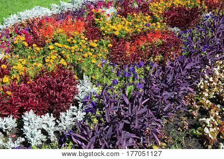 Fall Plants for Flower Bed. Colorful garden flowerbed in autumn. Flower Bed Design. Fall Flowerbed Gardening.