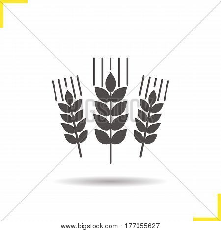 Wheat ears icon. Drop shadow barley silhouette symbol. Spikes of rye. Negative space. Vector isolated illustration