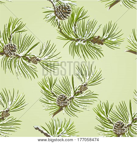 Seamless texture branch Pine tree with pine cones and snow vector illustration
