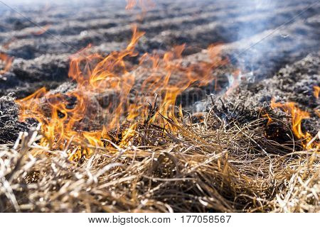 Burning of the remains of the agricultural crop xufa.