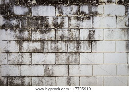 Surface brick grungy wall with cream tones for use as background copyspace.