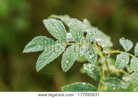 green leaf with morning dew close up
