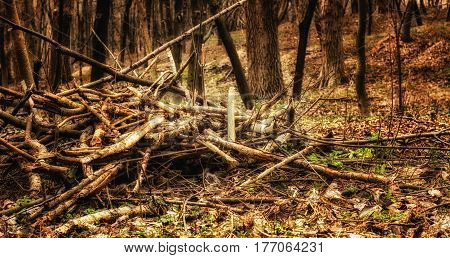 A pile of firewood in the spring forest the beauty of nature a stock of wood raw materials
