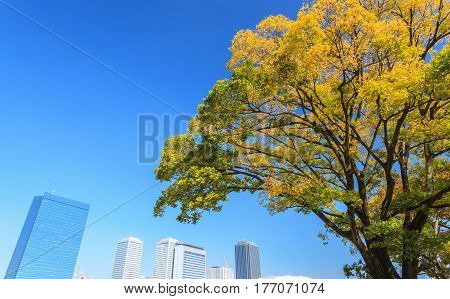 Osaka cityscape with beautiful yellow tree in autumn season at Osaka Japan