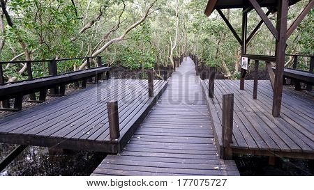Wooden walkway at the mangrove forest in  tropical coastal. Mangroves are salt tolerant trees and are adapted to life in harsh coastal conditions.