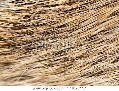 mouse fur as background . Photo taken by professional camera and lens
