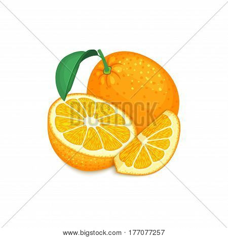 Composition of tropical orange fruits. Ripe vector citrus orange fruit whole and slice appetizing looking. Group of tasty juicy fruits for the packaging design of juice, breakfast, healthy food.