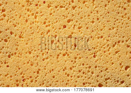 The yellow sponge with porous texture background