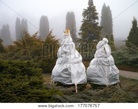 New life modern landscape gardening Winter tree transplantation. Outdoor shot