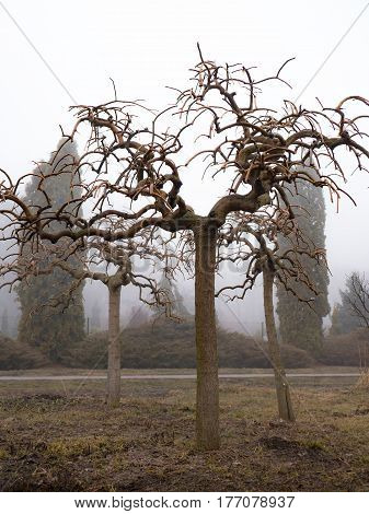 Crown formation of trees. Spring works in the garden and park.