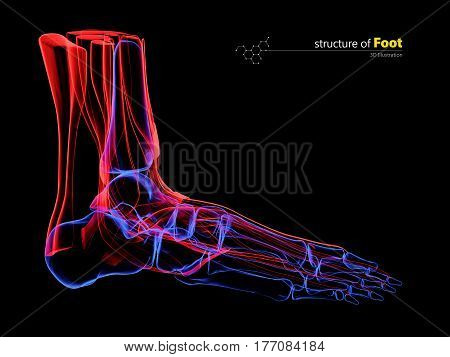 x-ray image of human foot. 3d Illustration