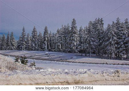 Plowed Road & Snow Laden Trees In Winter