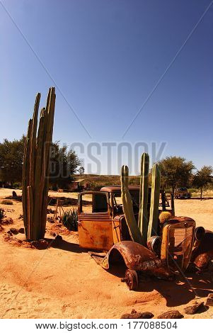 Cacti grow in the remains of the old car, South Africa