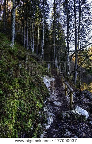 alpine forest trail in autumn near the lake