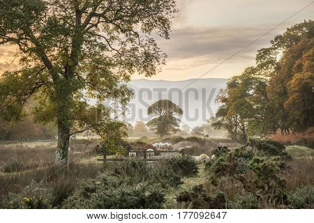 Stunning Winter Foggy Sunrise Over Countryside Around Crummock Water In Lake District England