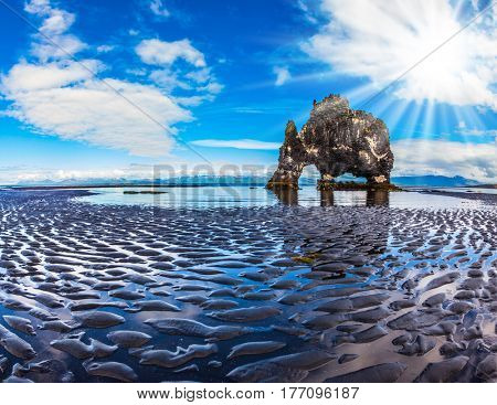 Concept of northern extreme tourism. The Basalt rock - Elephant Hvitsercur during an ocean outflow. Pale northern sun of Iceland at sunset