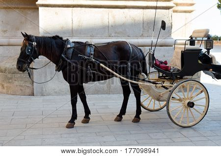 horse in harness near the wall tourist