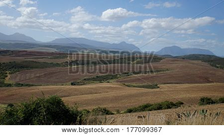 Hilly landscape in the province of Western Cape in South Africa in autumn, cropped fields and in the background the mountain chain Langeberg Mountains, blue sky with white clouds