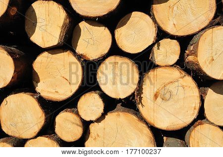 Pile of numbered wooden logs. May be used as natural background.