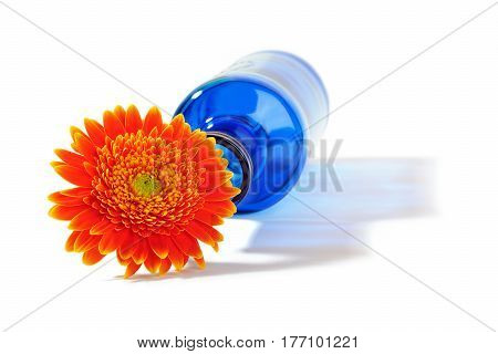 Orange gerbera flower in blue bottle throwing a shadow on a white background